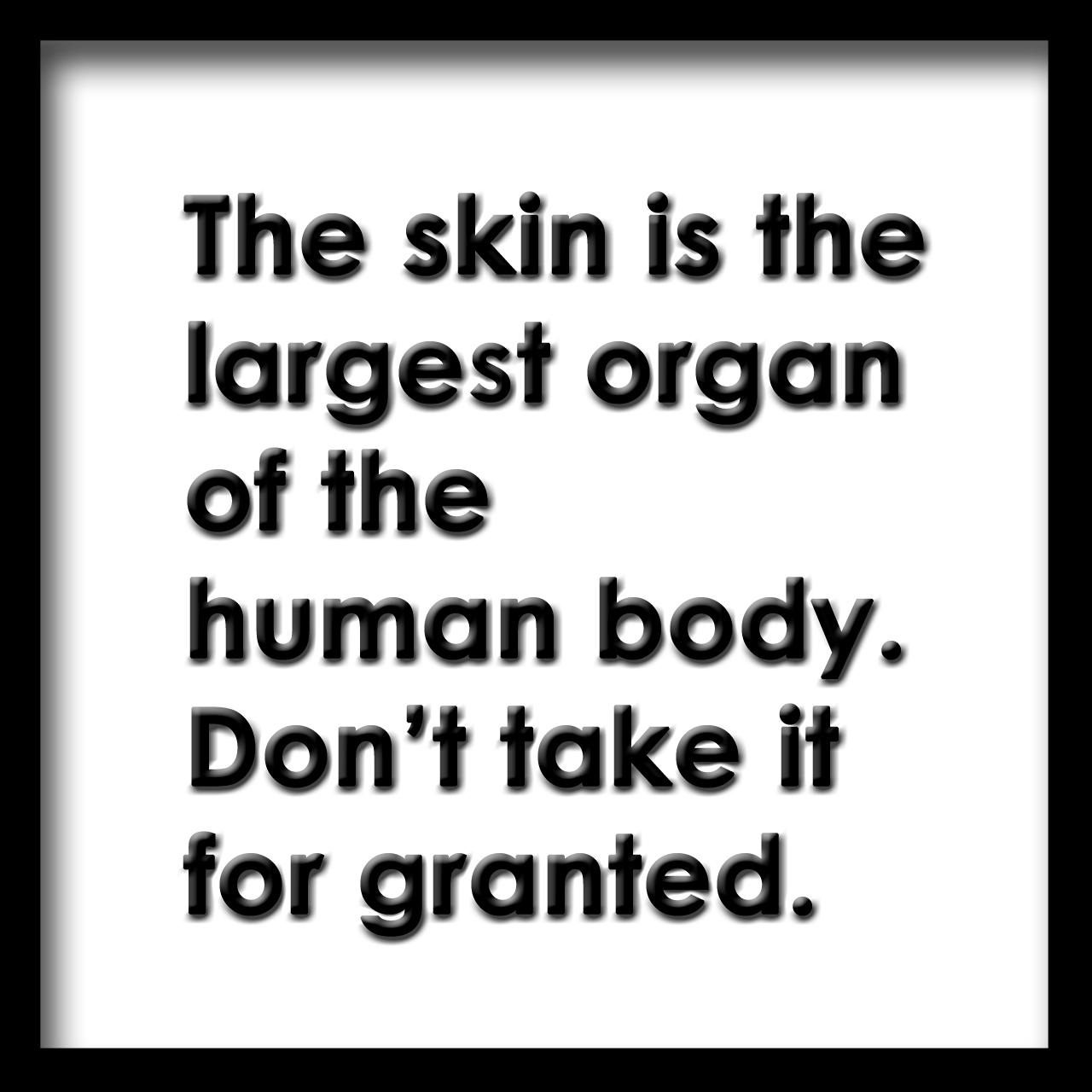 skin-largest-organ.jpg